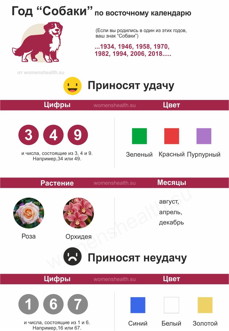 Инфографика: характеристика 2018 года Собаки