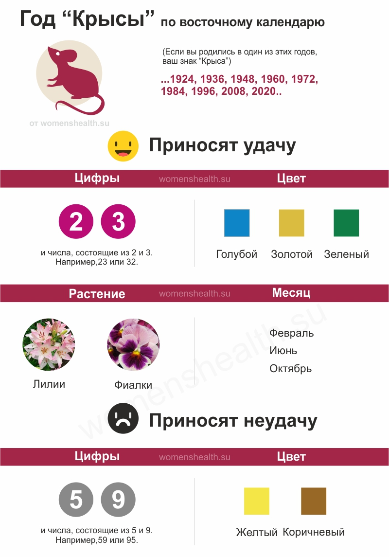 Инфографика: характеристика 1984 года Крысы