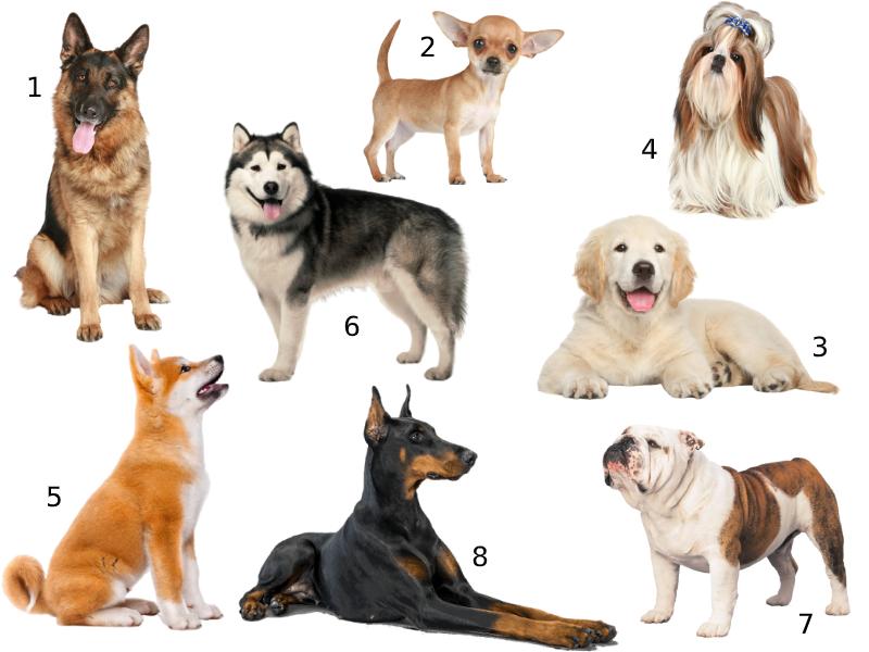 Коллаж с собаками